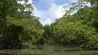 Es muss nicht immer der Schutz des Regenwaldes sein.