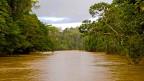 Noch idyllisch: Der Rio Tiputini im Yasuní Regenwald.