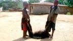 Zwei Kinder in Gabun mit einem erlegten Affen.