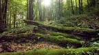 Macht der Pflanzen: Moos hat eine grosse Gestaltungskraft.