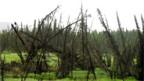 «Betrunkene Bäume» - eine Folge von Thermokarst (auftauende Dauerfrostböden).