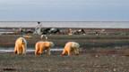 Bush will Eisbären für Ölfelder in Alaska opfern.