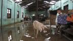 Die dreitägige Staatstrauer in Burma hat begonnen und noch immer warten die Zyklon-Opfer auf Hilfe.