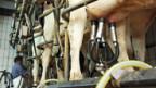 Bauern in Ostdeutschland werden die Subventionen gekürzt.