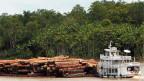 Illegale Rodungen bedrohen den Regenwald am Amazonas.