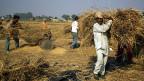 Reisbauern in Indien profitieren von den Möglichkeiten, die die neuen Handys bieten.