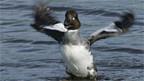 Wildvögel sind kaum für die Übertragung verantwortlich.