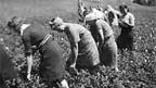 115 000 vom Krieg verfolgte fanden 1945 Zuflucht in der Schweiz.