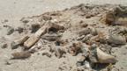 Zerstörte Fossilien nach der Rallye-Dakar 2012