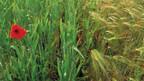 Strenge Auflagen für Bio-Bauern.