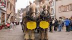 Die kräftigen Brauereipferde Quinto und Diego warten vor dem Restaurant brav auf ihren Kutscher.