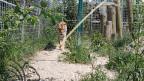 Soll abgebrochen werden: Rene Stricklers Raubtierpark