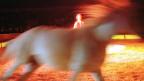Bei der Verwertung des Inventars der Circus Nock AG sind die Tiere des Zirkus ausgenommen, sie befinden sich in Privatbesitz.