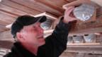 Vogelschützer montiert Mehlschwalbennest