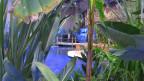 Ein kleiner Dschungel, mitten in der Möbelabteilung der BEA.
