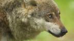 Wolfstouren stossen auf wenig Begeisterung.