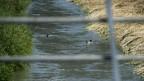 Neue Untersuchungen zeigen: Auch Grund- und Trinkwasser sind bei Visp belastet.