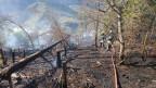 Rund 3000 Quadratmeter Wald und Wiesen fielen den Flammen zum Opfer.