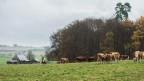 Wann ist ein Bauernbetrieb ein «landwirtschaftliches Gewerbe»? Die Berner Bauern sind sich uneins.