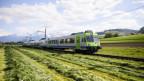 BLS-Zug fährt durch eine grüne Wiese