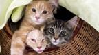 Sechs Katzen sind mehr als genug, entschied das bernische Verwaltungsgericht.