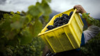 Die Probleme im Walliser Weinbau wiegen schwer.