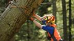 Ein Mann mit Schutzkleidung stemmt sich gegen einen Baumstamm.