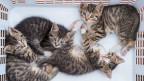 Junge Kätzchen in einem Korb