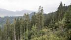 Blick auf einen Schutzwald
