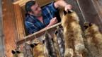 Mit dem Verkauf harzt es: Die Jäger bleiben auf ihren Fuchsfellen sitzen.