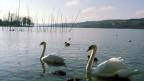 Der Bodensee: Künftig vielleicht nicht nur Süsswasser-, sondern auch Energiespeicher.
