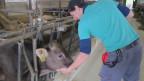 Jungbauer Ralf Canclini liebt die Arbeit mit den Tieren.