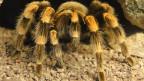 Sophie die Spinne