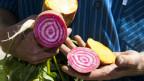 Gemüse in den Händen eines Bauern.