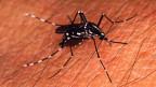 Die Tigermücke - im Tessin ist sie 2003 erstmals aufgetaucht.