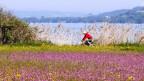 Velofahren direkt am Ufer - das soll einst rund um den See möglich sein.