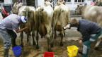 Viehmärkte sind nicht mehr zeitgemäss finden verschiedene Politiker.