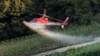 Ein Helikopter spritzt Pflanzenschutzmittel auf eine Plantage.