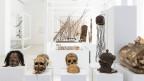 Blick in die Ausstellung «Wissensdrang trifft Sammelwut» im Museum der Kulturen in Basel.