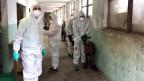 Veterinäre in Schutzanzügen kümmern sich um kranke Ziegen.