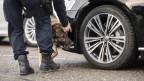 Ein Polizist kontrolliert mit seinem Hund ein Auto.
