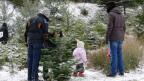 Ein Erlebnis für Gross und Klein: Weihnachtsbäume selber schneiden.