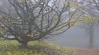 Audio «Windy tunes & foggy songs» abspielen.