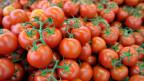 Audio «Tomate mit Geschmack - eine Glückssache?» abspielen.