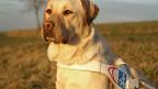 Hund: Assistent auf vier Pfoten