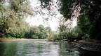 Auenlandschaft mit Fluss