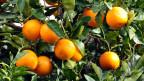 Iren Meier gibt Auskunft über die Glaubwürdigkeit von «Ismaels Orangen» (Bild: Pixelio_Peter Smola)