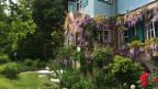 Die Glyzinie, die am ehemaligen Haus von Hermann Hesse blüht, wurde von ihm selber gepflanzt
