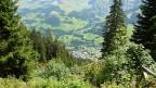 Schutzwald in Adelboden