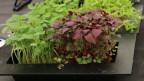Diverse Pflanzenkeimlinge.